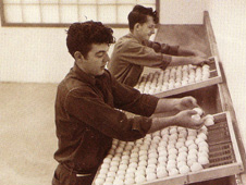 Historical Egg Farm